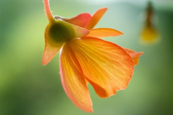 flower by tpfkapm