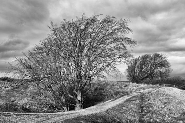 Sunken tree by mbradley