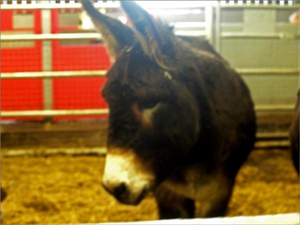 Donkey ... by JuBarney