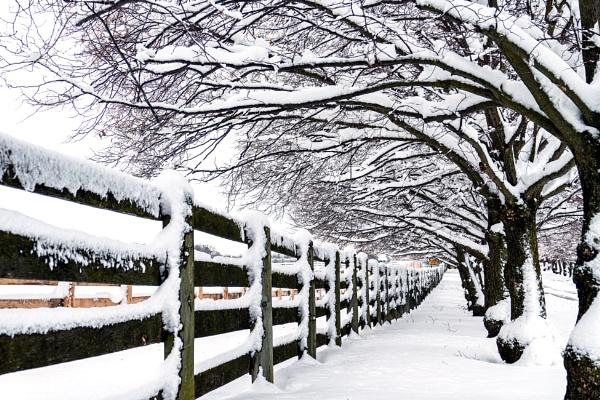White Snow Scene by manicam