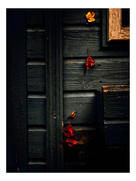 Autumn Remnants by pauljt