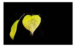 Two-Leaf