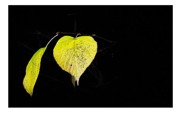 Two-Leaf by pauljt