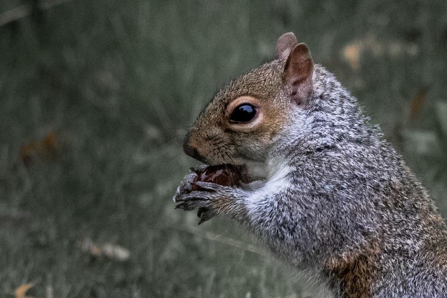 Squirrel & Nuts !