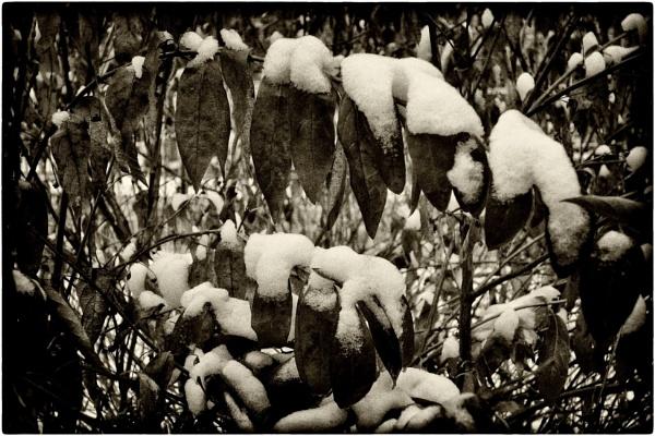 it snowed again by leo_nid