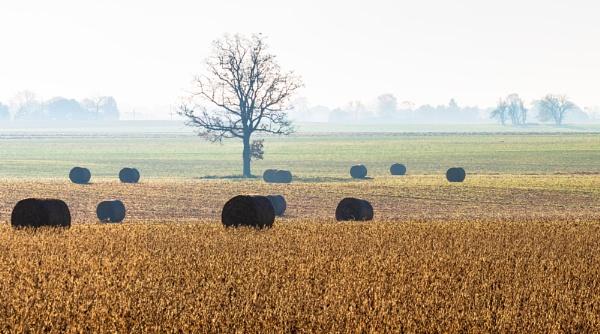 Farm by TDP43