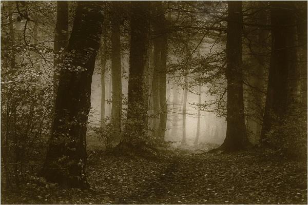 November Mist 2 by MalcolmM