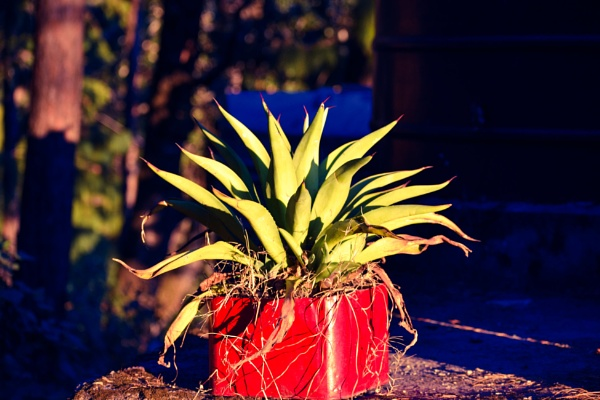 Plant by hemant0