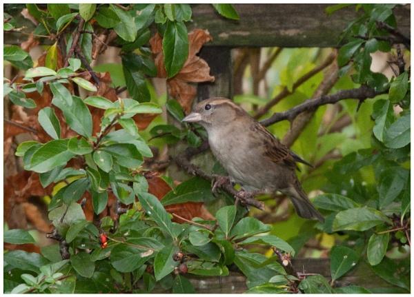 Garden visitor by davidgibson