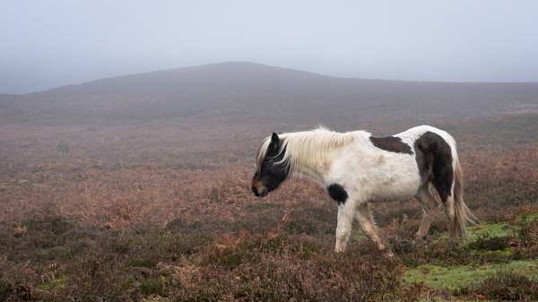 Pony in Mist by Paintman