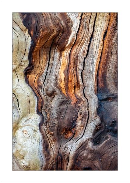 Sherwood Oak by Steve-T