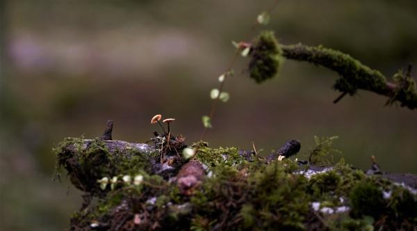 mushrooms by maratsuikka
