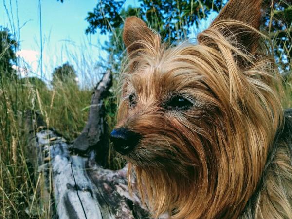 Covid companion by nicbone