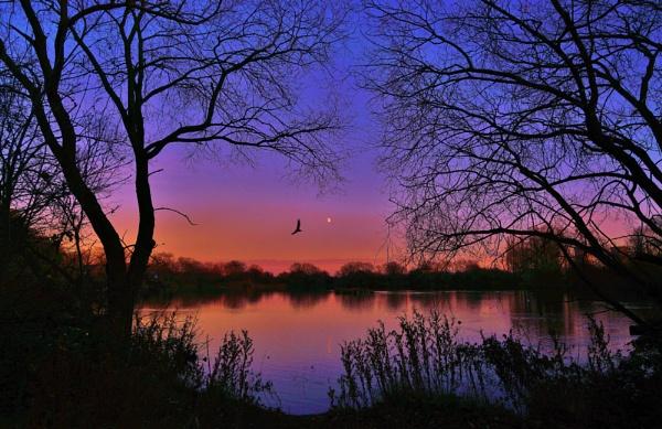 Winter sun on Charlton\'s Pond Billingham. by georgiepoolie