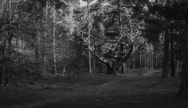 bw tree by rocky41