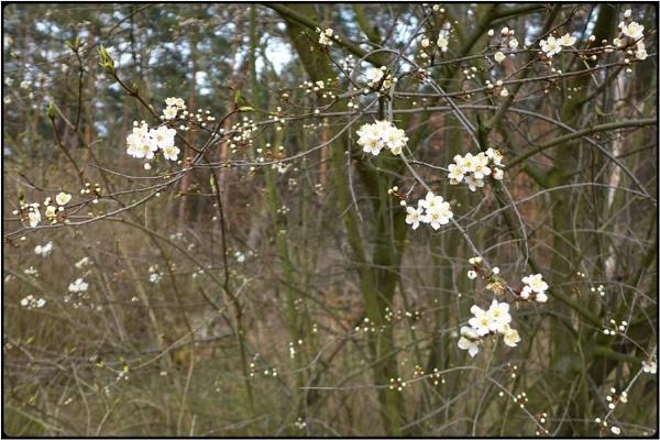 sakura in winter by FabioKeiner