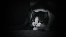 Tabby Cat Dylan