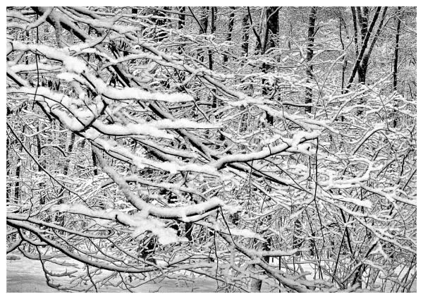 a walk in the woodland by leo_nid