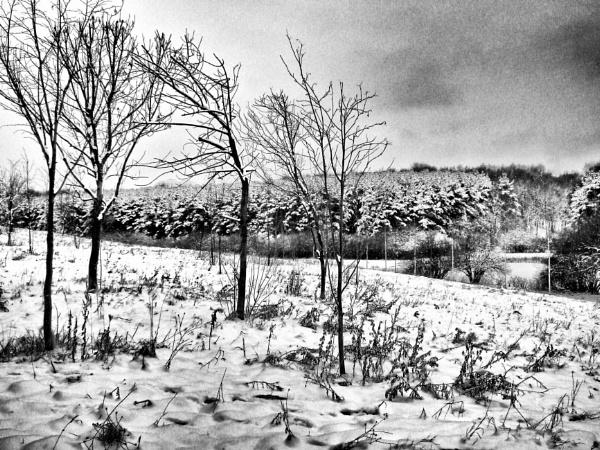 woodland by leo_nid