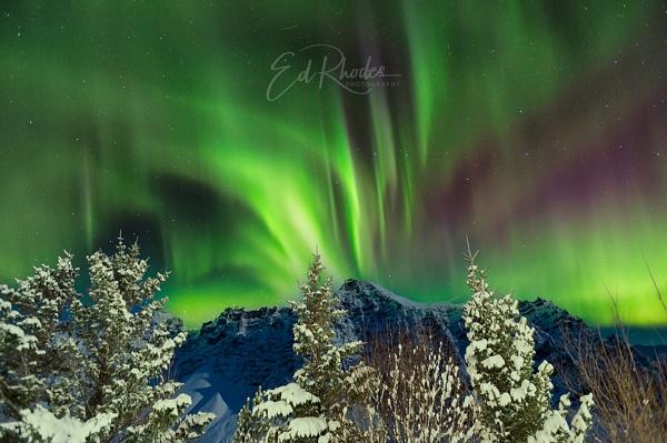 Aurora delights by edrhodes