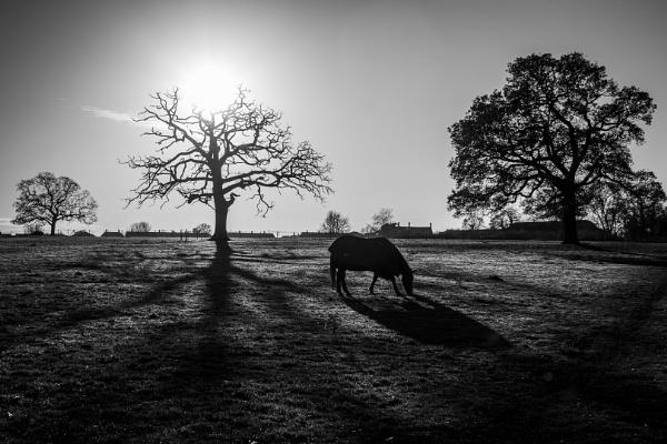 Long Shadow by Silverlake
