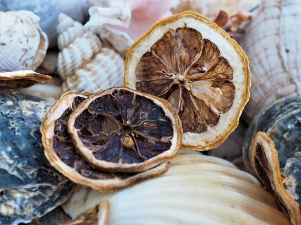 Lemons and shells by GwB