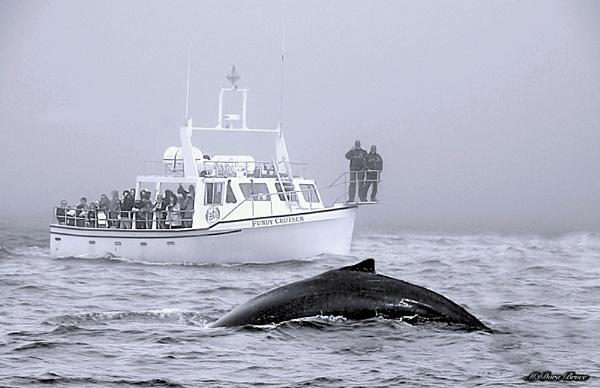 LUNA: The Humpback whale by IamDora