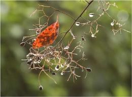 Caught amongst the raindrops