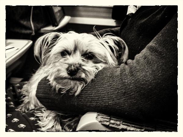 Grumpy Passenger by Alfie_P