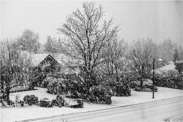 Snow by Daisymaye