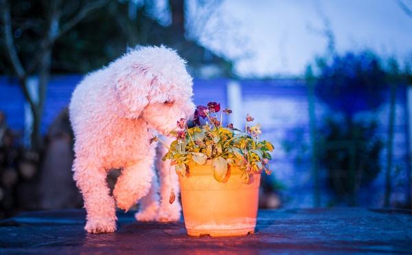 Smell the flowers by JackAllTog