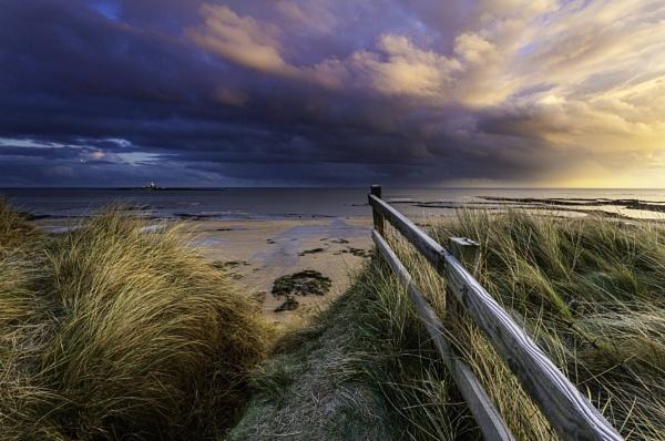 Golden Hauxley Morning. by neil75