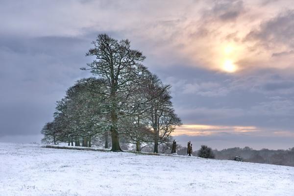 Winters Dream by DaveShandley