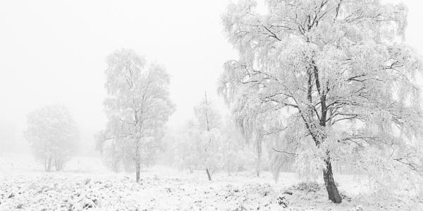 Snowy grey day by soulsharer