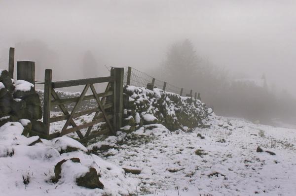 December snow by michaelfox
