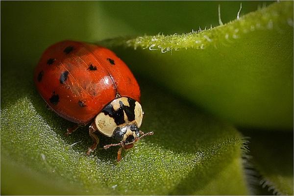 Ladybird2 by kevmor999
