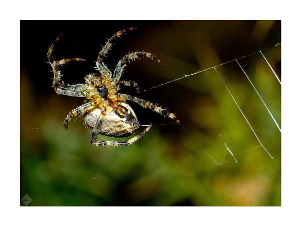 8 legged bug by mohikan22