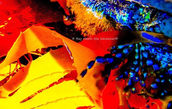 Kelp Abstract- Digital Art 9 by RayHeath