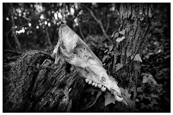Skull by luminus