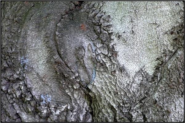 treecore by FabioKeiner