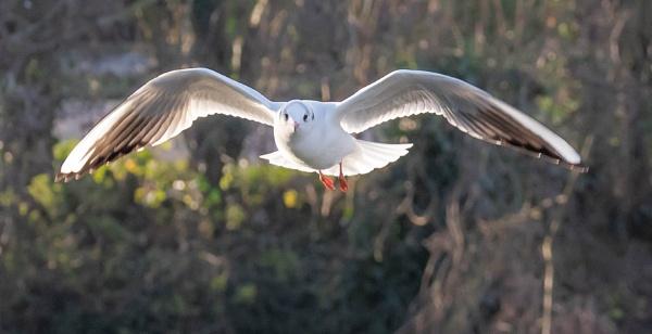 Gulls by Danny1970