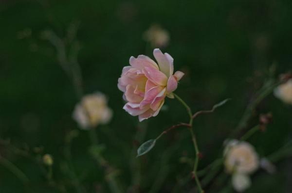 Sweet Dream..... 2. by Mollycat