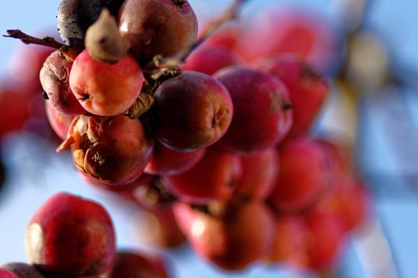 apples by retroman