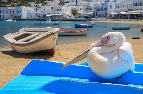 Mykonos pelican by rickie