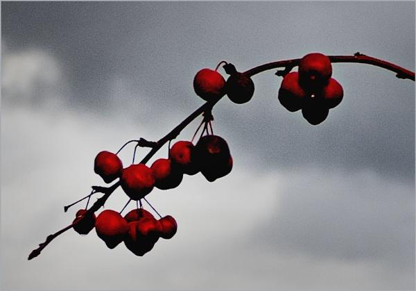 End of the Year Cherries by AlfieK