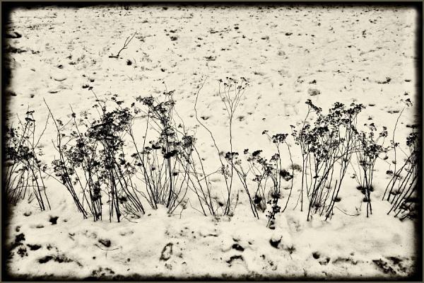 winter flowers by leo_nid