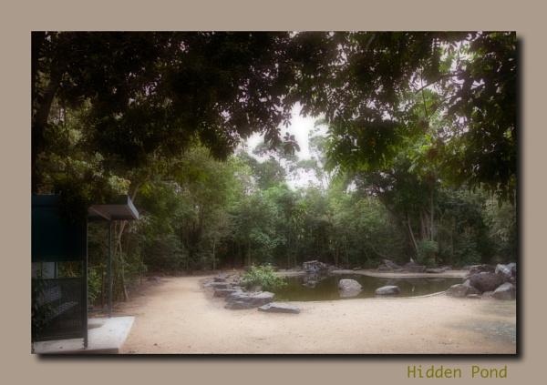 Hidden Pond by Peco