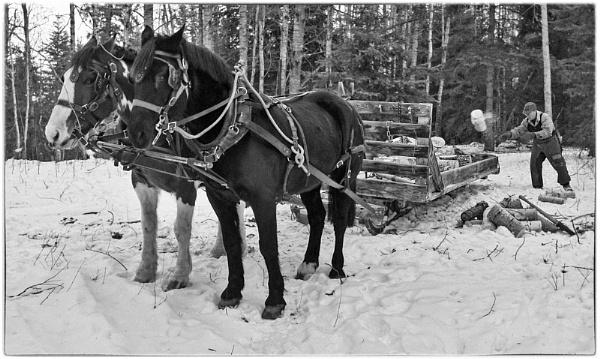 Alberta Winter 2 by MalcolmM