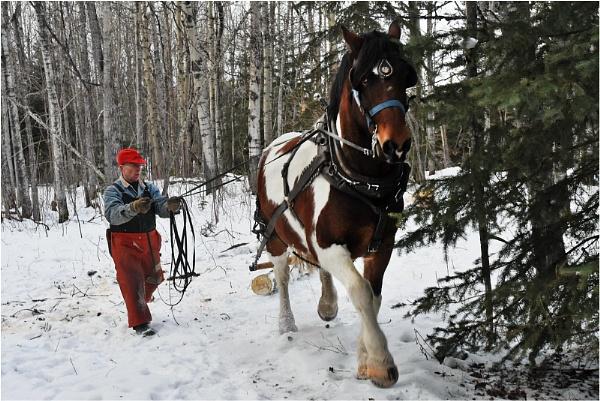 Alberta Winter 4 by MalcolmM