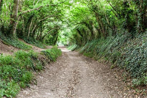 Tree Tunnel by blrphotos